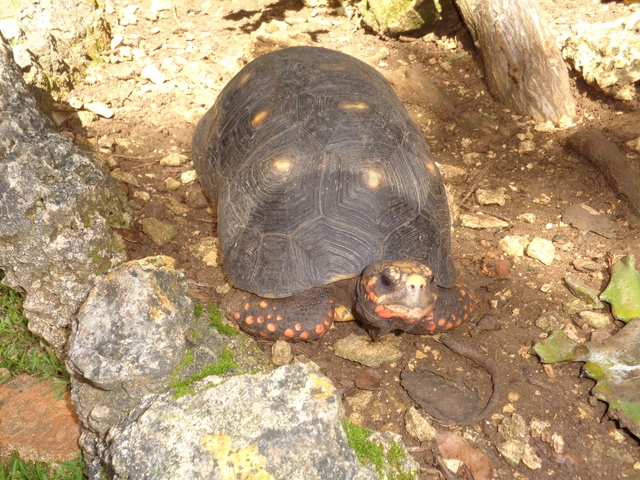 Barbados Nature Wonders and Harrisons Cave Excursion Excellent Nature Tour for Animal Lovers