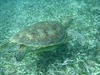Belize Coral Gardens and Shark Ray Alley Snorkel with Caye Caulker Beach Break Excursion Best Day!