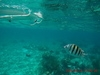 Belize Coral Gardens and Shark Ray Alley Snorkel with Caye Caulker Beach Break Excursion Best Snorkel Trip Ever!