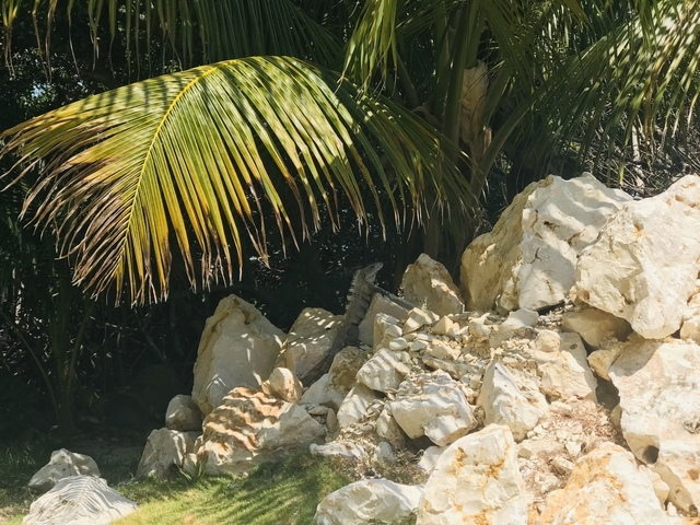 Belize Exclusive Secluded Island Beach Day Pass Excursion  Best Excursion Ever