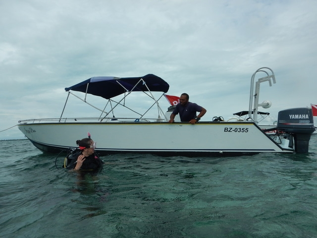 Belize Hol Chan One Tank SCUBA Dive and Shark Ray Alley Snorkel Excursion by Air Awesome all the way around!