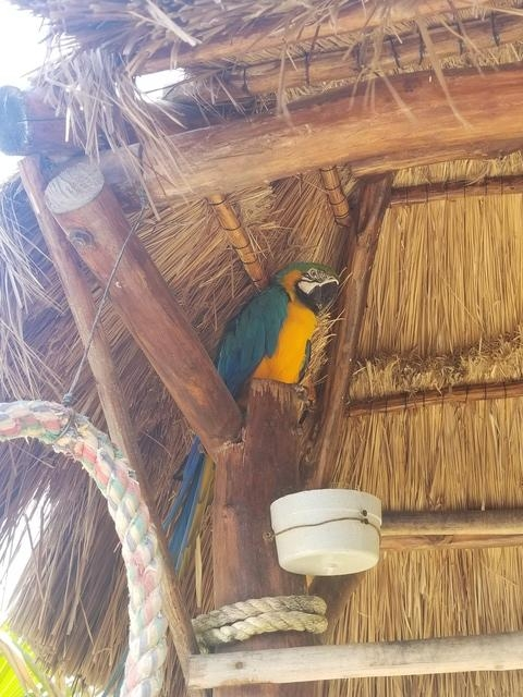 Cozumel East Side Beaches, Bars and Cantina Hop Excursion Best excursion ever!!!!
