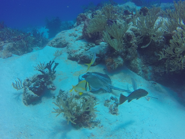 Cozumel Mr. Sanchos Beach Club 2 Reef Marine Park Snorkel Excursion by Boat Highly Recommend!