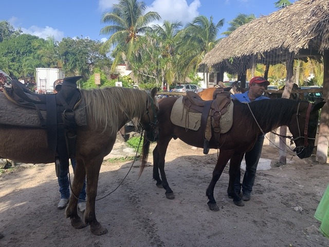 Cozumel Mr. Sanchos Beach Horseback Riding Excursion Intimate experience