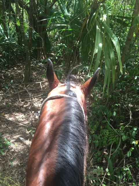 Cozumel Mr. Sanchos Beach Horseback Riding Excursion Loved it. Very friendly people