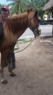 Cozumel Mr. Sanchos Beach Horseback Riding Excursion Amazing
