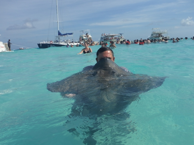 Grand Cayman Private Stingray City Catamaran Sail and Snorkel Excursion AMAZING day!!!