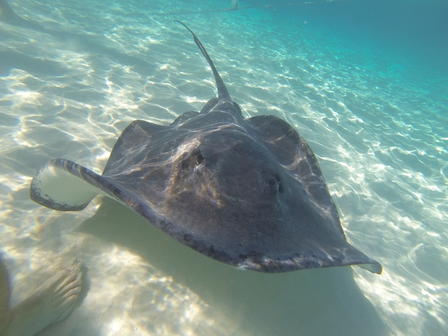 Grand Cayman Stingray City Catamaran Sail and Snorkel Excursion So worth it!