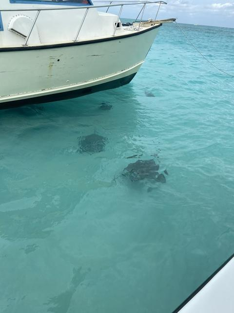 Grand Cayman Stingray City Sandbar, Coral Gardens and Barrier Reef Snorkel Excursion Can I go again