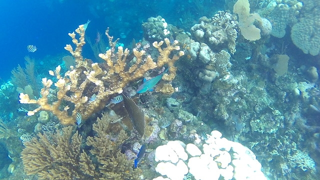 Roatan 3 Snorkel Site Hopping and Beach Break Excursion Wonderful Tour!