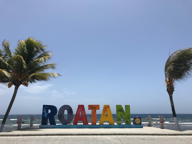 Roatan City Highlights, Monkey and Sloth Hangout, Snorkel and Beach Break Excursion More than what I expected!