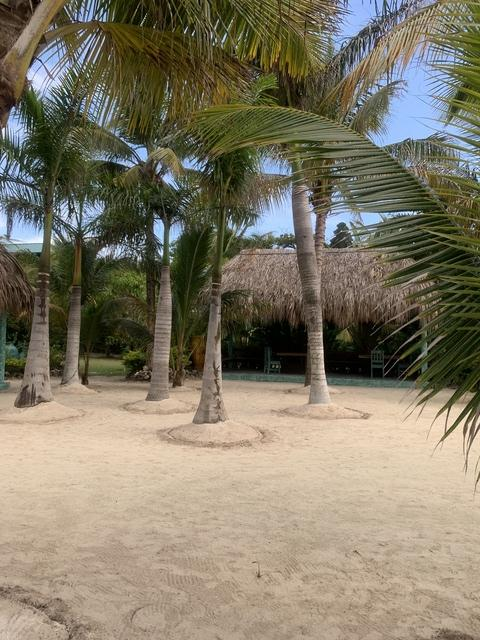 Roatan Little French Key Full Island Day Pass Excursion Beautiful