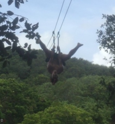 Roatan Pirates Extreme Jungle Zip Line Canopy and Reef Snorkel by Boat Excursion Favorite part of the whole cruise!!