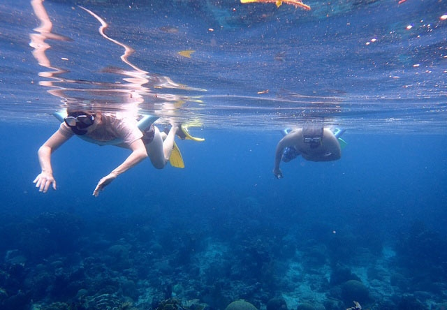 Roatan South Side Snorkel and Beach Break Excursion Excellent Snorkel Opportunity