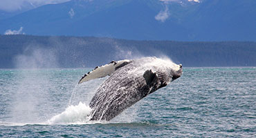 Hoonah Cruise Excursions