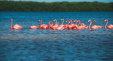 Yucatan Cruise Excursions