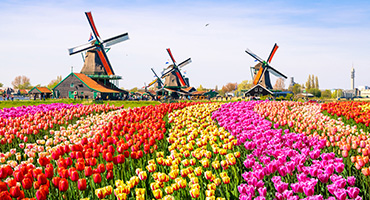 Amsterdam Cruise Excursions