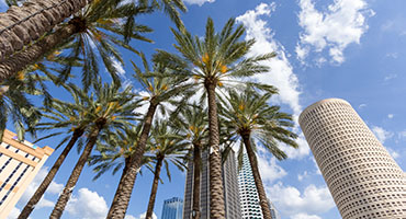 Tampa Cruise Excursions