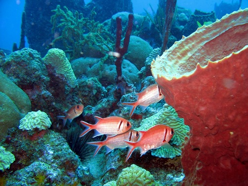 Dominica Champagne Reef Excursion Reservations