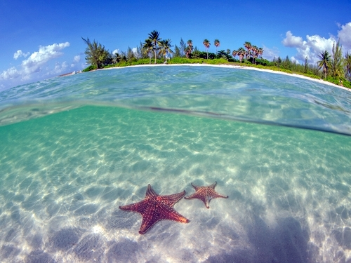 Grand Cayman swim with stingrays Shore Excursion Reviews