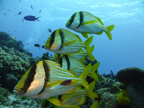 Cozumel SNUBA Dive and Snorkel Chankanaab Adventure Park Excursions Booking