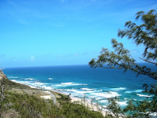 Barbados  West Indies (Bridgetown) island nature highlights Tour
