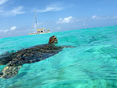 Curacao guided snorkeling Shore Excursion Cost