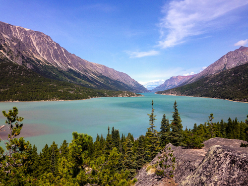 Haines Alaska Wildlife viewing Excursion Booking