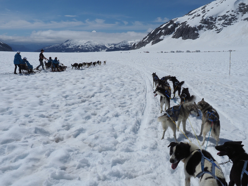 Juneau helicopter and dog sled Tour Reservations
