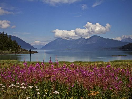Haines Alaska Photo sightseeing Tour Reviews
