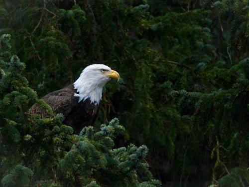 Haines Alaska nature photography Tour Reservations