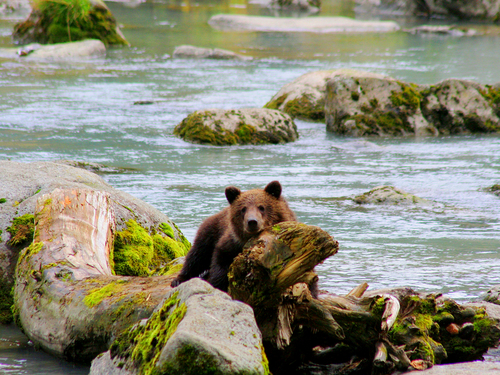 Haines Alaska nature photography Trip Booking