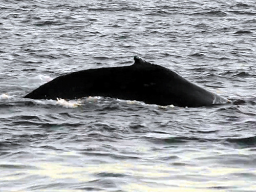 Juneau whale watching Excursion Reservations