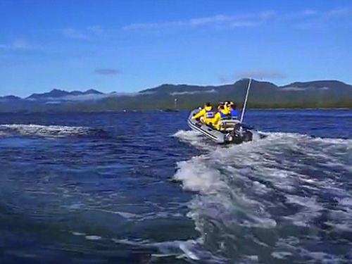 Ketchikan whale watching boat Trip Reservations