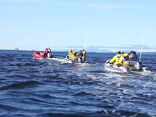 Ketchikan whale watching boat Trip Booking