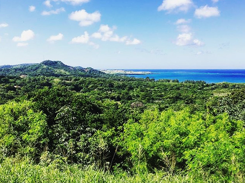 Roatan parrot tree Cruise Excursion Cost