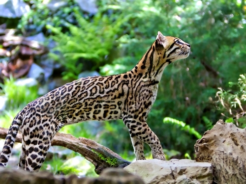 Belize  Belize City Wildlife Sanctuary Shore Excursion Reviews