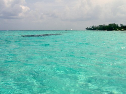 Grand Cayman  George Town Stingray City  Reservations