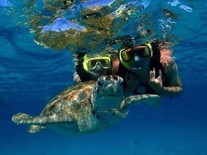 Barbados Best Eco Highlights,Turtle Encounter Excursion with Lunch (#1)