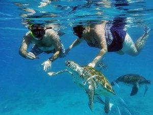 Barbados Shipwreck Snorkel, Turtles, Lunch and Open Bar Excursion