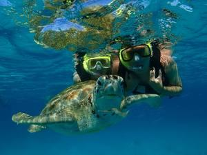 Barbados Swim with Turtles, Shipwreck Snorkel and Pirates Cove Beach Excursion