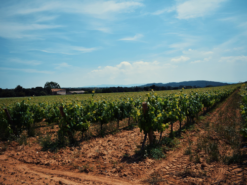 Barcelona wine tasting Tour Tickets