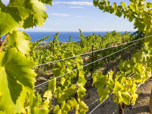 Barcelona  Spain wine tasting Cruise Excursion Reviews