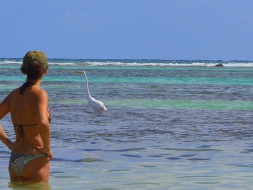 Costa Maya Barefoot Beach Trip Reservations