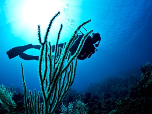 Roatan Certified Dive Master Shore Excursion Reviews