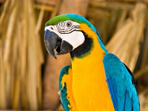 Belize  Belize City animal reserve Trip Cost
