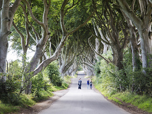 Belfast Sightseeing, City Murals, Dark Hedges, and Giants Causeway Excursion