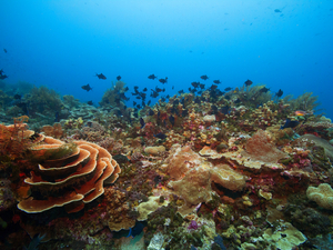 Belize Coral Gardens and Shark Ray Alley Snorkel with Caye Caulker Beach Break Excursion