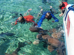 Belize Snorkel Shark Ray Alley, Coral Gardens and Caye Caulker Beach Break Excursion