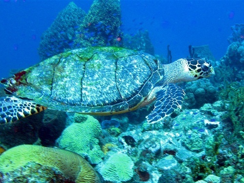 Dominica Roseau champagne reef Shore Excursion Prices